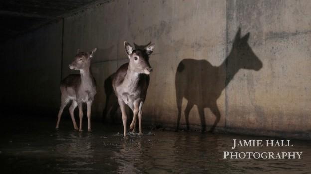 Jamie_tunnelsplash1b